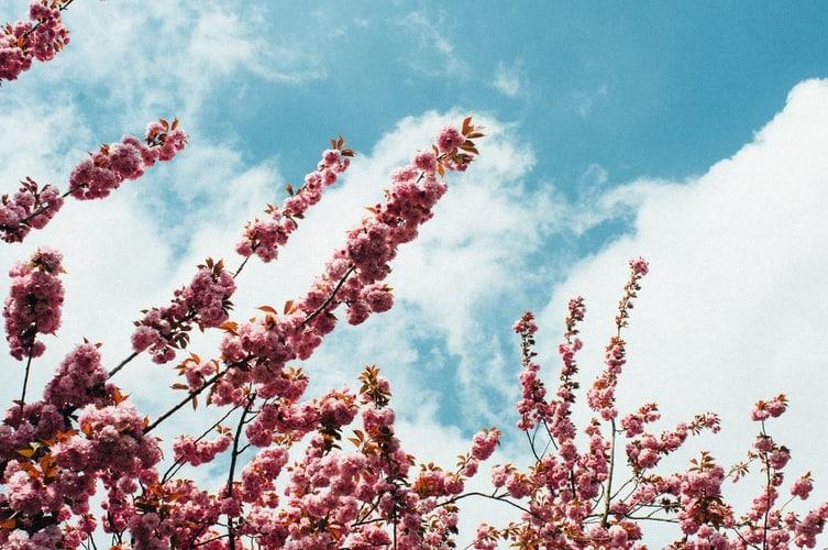 Tree flowers in spring weather.